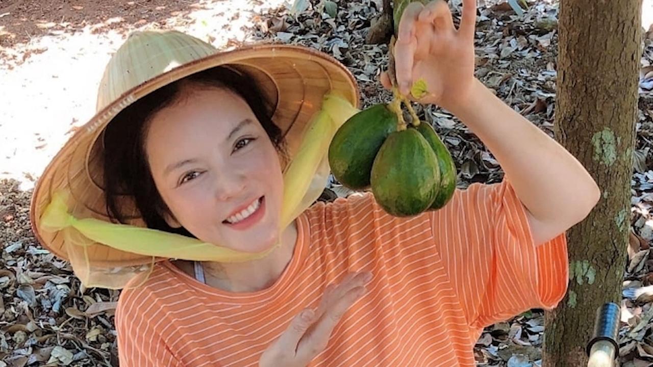 Cô bảy Lý Nhã Kỳ thu hoạch bơ, sầu riêng tại vườn nhà