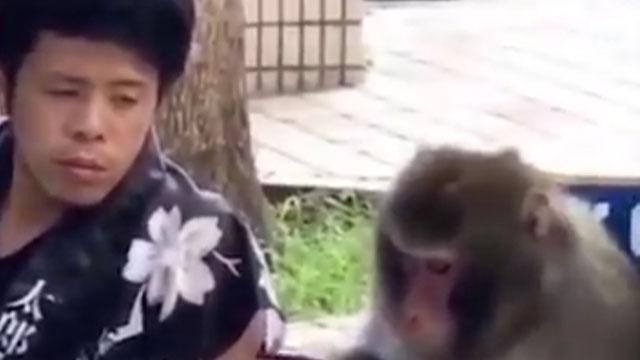 Nghỉ dịch quá lâu ở nhà chơi với khỉ
