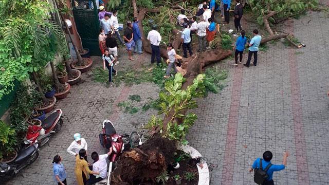 Khoảnh khắc thương tâm, cây phượng bật gốc đè 18 học sinh
